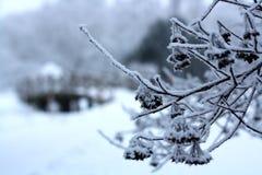 Gałąź zakrywać z hoarfrost Piękną białą zimą Obrazy Royalty Free