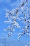 Gałąź zakrywać z lodem Obrazy Royalty Free