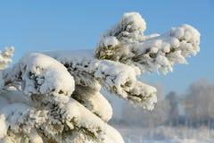 Gałąź zakrywająca z białym śniegiem Zdjęcia Royalty Free
