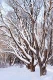 gałąź zakrywający śnieżny drzewo zdjęcie stock