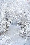 gałąź zakrywający śnieg Obraz Royalty Free