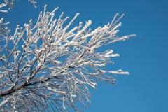 gałąź zakrywający śnieg zdjęcia royalty free