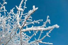 gałąź zakrywali hoarfrost drzewa Zdjęcia Royalty Free