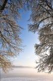 gałąź zasłony mgły ranek target1696_0_ Obraz Stock