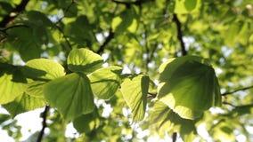 gałąź zieleń opuszczać saplings drzewny