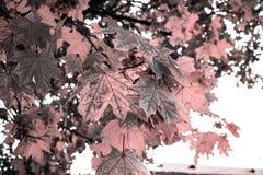 gałąź zieleń opuszczać saplings drzewny Fotografia Royalty Free