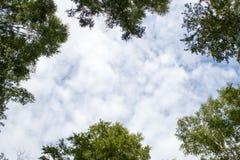 gałąź zielenieją lato brzeg rzeki nieba lato Obrazy Stock