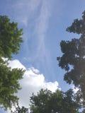 gałąź zielenieją lato brzeg rzeki nieba lato Zdjęcie Stock