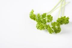 gałąź zielenieją pietruszki Obrazy Stock