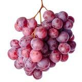 Gałązka czerwoni winogrona odizolowywający na białym tle obrazy royalty free