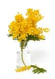 Gałązka mimozy w wazie fotografia stock
