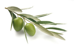 Gałązka oliwna Fotografia Stock