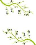 Gałązka oliwna Obrazy Royalty Free