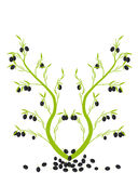 Gałązka oliwna Obraz Royalty Free