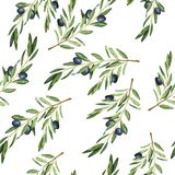 Gałązka oliwna bezszwowy wzór Ręka rysująca akwareli ilustracja royalty ilustracja