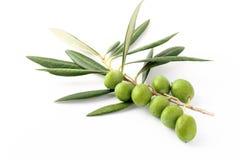 Gałązka oliwna i zielone oliwki Obraz Stock