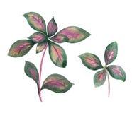 Gałązka z zieleń liśćmi Fotografia Royalty Free