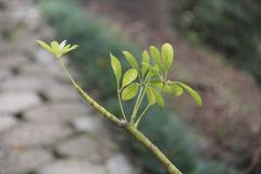 Gałązka z zielonym liściem i zamazanym tłem obrazy stock
