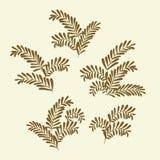 Gałązki oliwne Zdjęcie Royalty Free