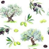 Gałązki oliwne, drzewa - oliwka bezszwowy wzór akwarela royalty ilustracja