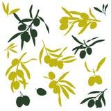 Gałązki oliwne, płaskie ilustracje royalty ilustracja