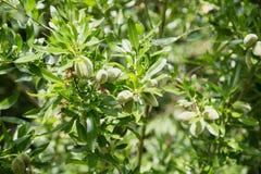 Gałązki oliwne w słońcu obraz royalty free
