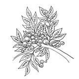 Gałązki oliwnej nakreślenia kreskówki doodle wektoru czarny i biały ilustracja Zdjęcia Stock