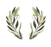Gałązki oliwnej oliwki wianek royalty ilustracja