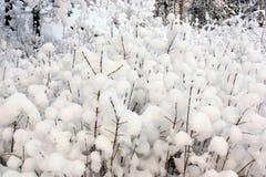 Gałązki w śniegu w zima lesie jako jeden tekstury natura Zdjęcie Stock