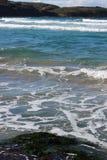 Gałęzatka i morze z falami zdjęcie royalty free