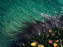 Gałęzatka i nabrzeżni kwiaty obraz stock
