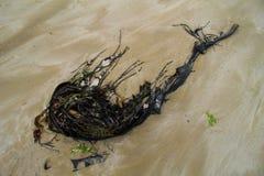 Gałęzatka na plaży tworzy ładną kolor paletę obrazy royalty free