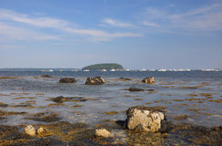 Gałęzatka na skałach Maine wpust zdjęcia royalty free