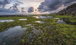 Gałęzatka ocean w Baron plaży Obraz Stock