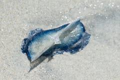 Gałęzatka przy plażą Fotografia Royalty Free