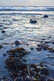 Gałęzatka przy skalistą beal plażą Obrazy Royalty Free