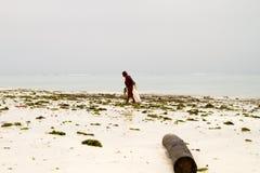Gałęzatka rolnicy w błękitne wody z białej plaży w Zanzibar Zdjęcia Stock