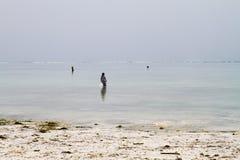 Gałęzatka rolnicy w błękitne wody z białej plaży w Zanzibar Zdjęcia Royalty Free