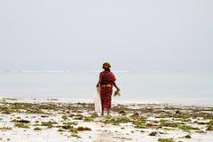 Gałęzatka rolnicy w błękitne wody z białej plaży w Zanzibar Zdjęcie Royalty Free