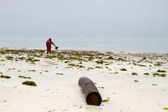 Gałęzatka rolnicy w błękitne wody z białych plaż I Zdjęcia Stock