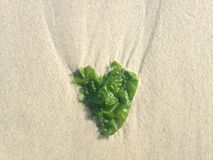 Gałęzatka w kształcie serce na Long Beach, Long Island Zdjęcie Stock