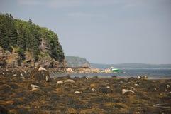 Gałęzatka zakrywający skalisty wybrzeże zdjęcie royalty free