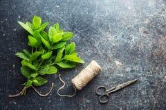 Gałęziaści nowi liście i nić z nożycami Zdjęcie Royalty Free