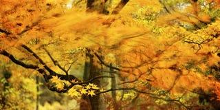 gałęziaści płomienie Fotografia Stock