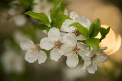 gałęziaści tło kwiaty wallpaper biel Zdjęcie Stock