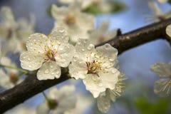 gałęziaści tło kwiaty wallpaper biel Fotografia Stock