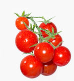 gałęziasta czereśniowa kropelek pomidorów woda Obrazy Royalty Free