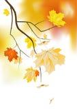 gałęziasta gradientowa klonowa siatka używać Zdjęcie Royalty Free