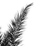 gałęziasta palma Zdjęcia Royalty Free