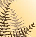gałęziasta roślina Zdjęcia Stock